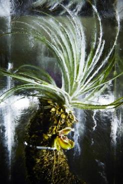 ICED-FLOWERS-10