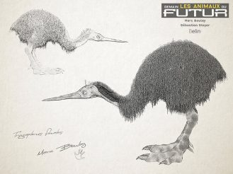 09-tringapterus-femelle-1024x766